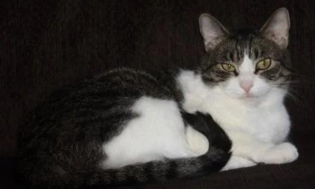 Chrissy cat
