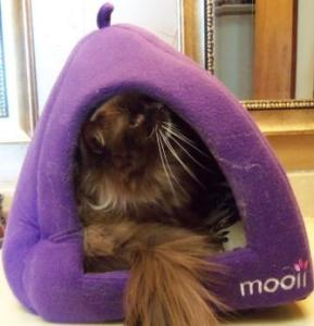 Mooii Igloo Pet Bed Review