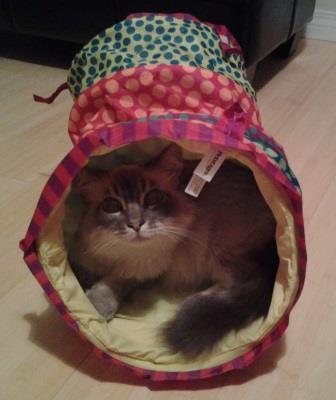 Tasha in the Cuddle Coil