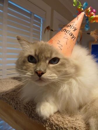 Happy Birthday Chiggy 2013