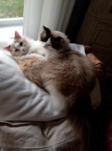 Gracie & Josie