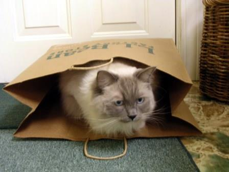 Thunder in his bags 001