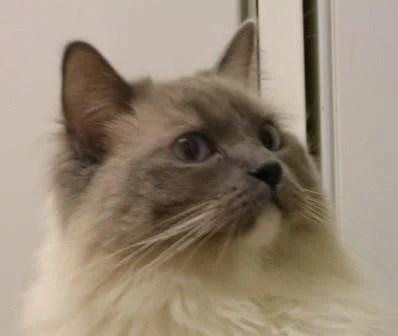 cats06 003