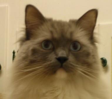 cats06 028