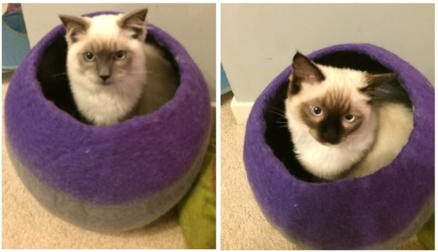 Raggs and Salvadore love the cat cave