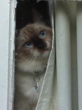 Amos longing be outside