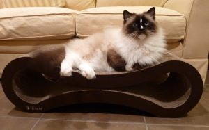PetFusion Cat Scratcher Lounge - Deluxe Review by Floppycats 3