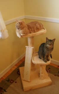 Mountain Cat Trees Incline Scratcher