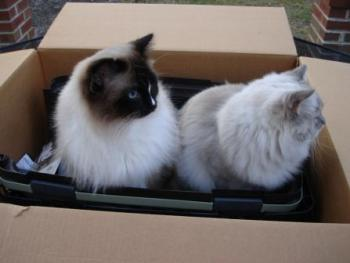 Petmate Carriers for Product Reviews