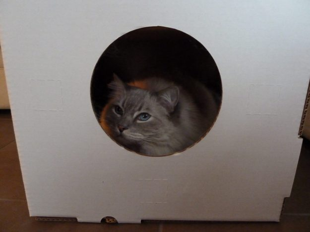 Kitty Cubby Cardboard Playhouse for Cats Review