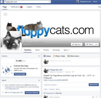 Floppycats on Facebook