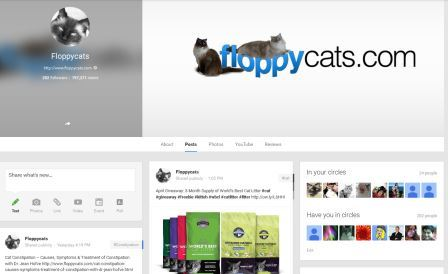 Floppycats on Google plus