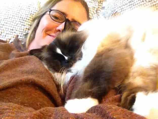 Ragdoll Cat Charlie Snuggling
