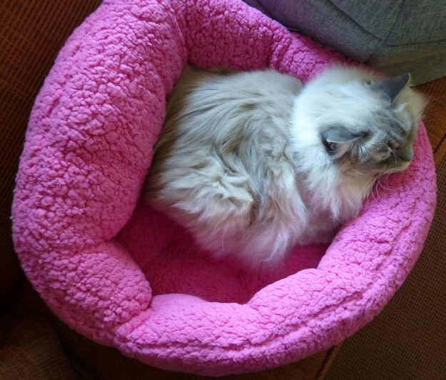 Trigg in Urban Paw Pet Bed Luna Ortho Cuddler in Sherpa Fuschia birds eye
