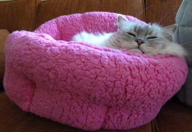Trigg in Urban Paw Pet Bed Luna Ortho Cuddler in Sherpa Fuschia