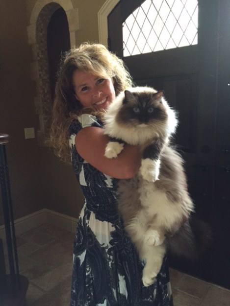 Bradley - Ragdoll of the Week  1
