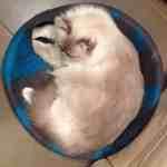 CatGeeks Comfy Cat Cave Colorfastness
