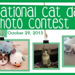 """Hurry!  TTPM's National Cat Day """"Paw It Forward"""" Photo Contest"""