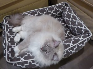 Bowsers Pet Bed Urban Lounger Product Review