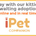 Kitty City NM Gets iPet Companion