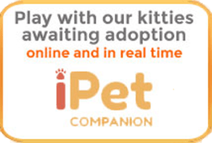 iPet Companion