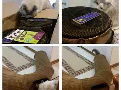 Neko Pawdz UI Cat Play Tunnel System Giveaway Winner Reports Back!
