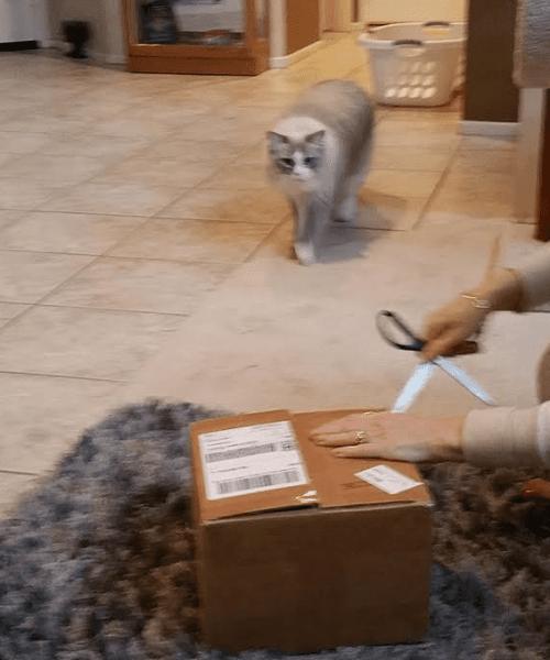 PawNosh Glass Cat Bowl Giveaway Winner Reports Back 5
