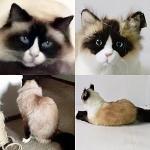 Personalized Cat Stuffed Animals