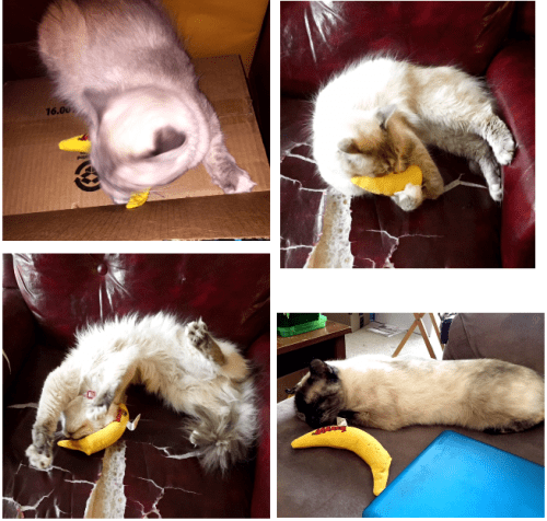 Yeowww Catnip Banana Giveaway in Honor of Rags Report Back