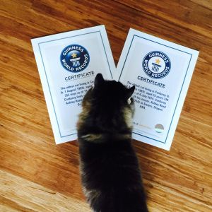 Corduroy - Guinness World Records Oldest Living Cat - Interview with Corduroys Mom Corduroy with his first two certificates