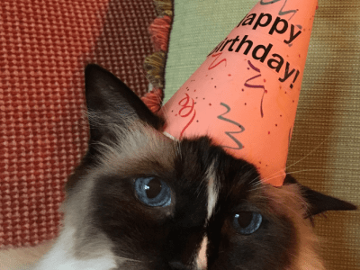 Happy 12th Birthday, Murphy!