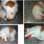 Another Bonus Giveaway Winner of Yeowww! Halloween Pumpkin Catnip Toy Reports Back!