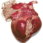 Cat Health Issues: 3 Alarming Facts You Didn't Know About Heartworm in Cats