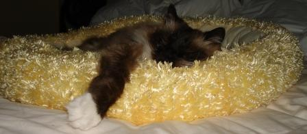 Rags in the Yellow Bed