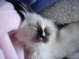 Hobbs as a Kitten