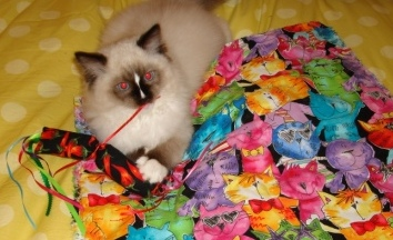 Colorado Catnip Toys Catnip Mat and Charlie