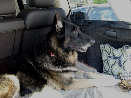 Tucker After Rehab in Car