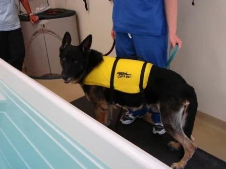Tucker in Life Vest