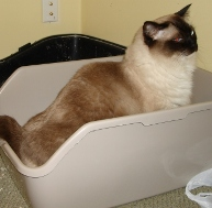 Caymus in the litter box
