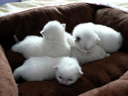 Paul, John, George and Ringo at 17 days old