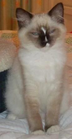 Murphy as a Kitten - Looks Drugged