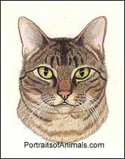 Tabby Cat by Cherie Vergos