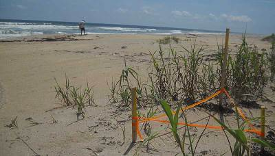 Secret beach: Hobe Sound NWR turtle nest