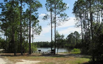 Bear Pond picnic area at Tiger Bay State Forest