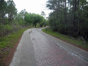 Brick road built in 1917 at Tiger Bay State Forest