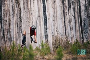 Matt Hunter - Bush invader anthill