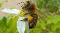 Depuis la mise en place du plan Ecophyto lors du Grenelle de l'environnement en 2008, visant une réduction de 50% de la consommation des pesticides, leur utilisation non seulement n'a […]
