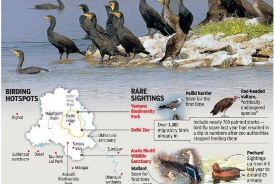 Migratory birds return to their favourite haunts