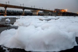 Are drugs discharged into the Yamuna toxic to aquatic life?