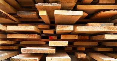 madeira-amazonia-shutterstock